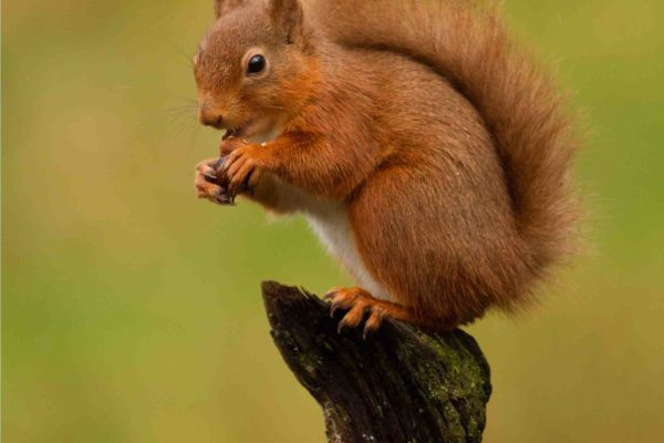 Devizes Camera Club exhibition poster features a red squirrel munching a nut